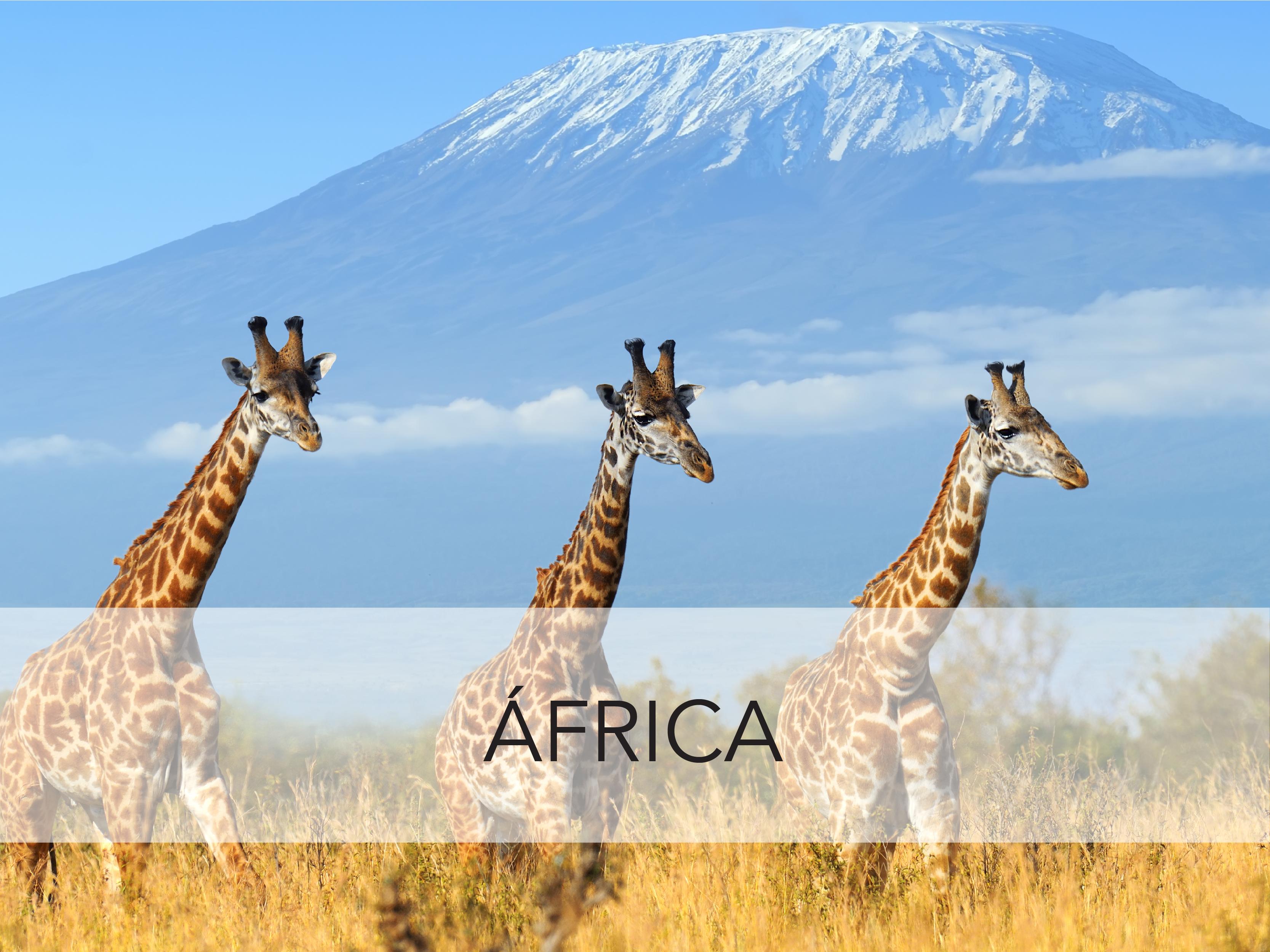 alt= Africa Fiesta Tour México destinos